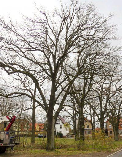 Biber - Baumdienst im Einsatz