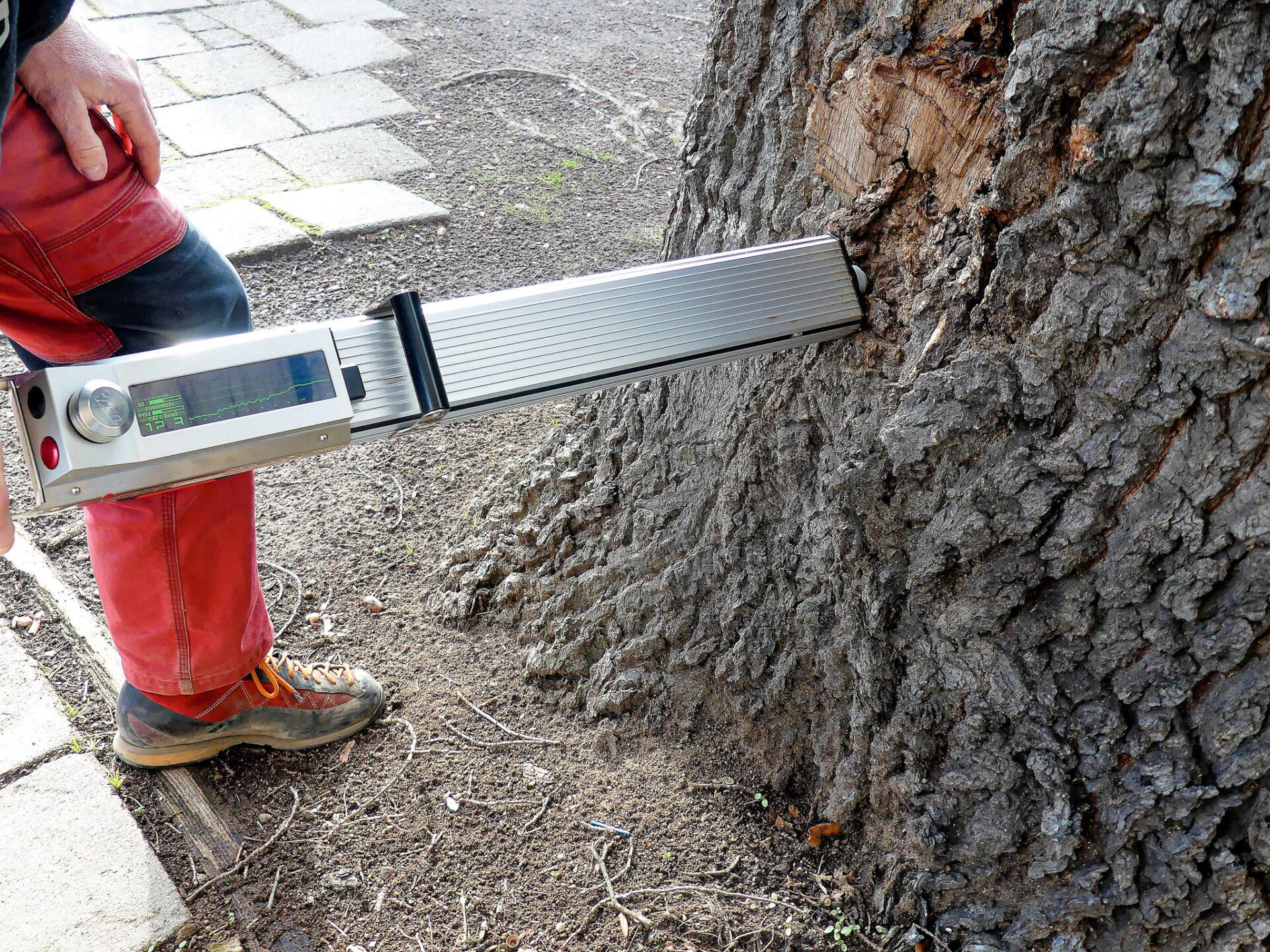 Holzdichtemessung mit PD 400