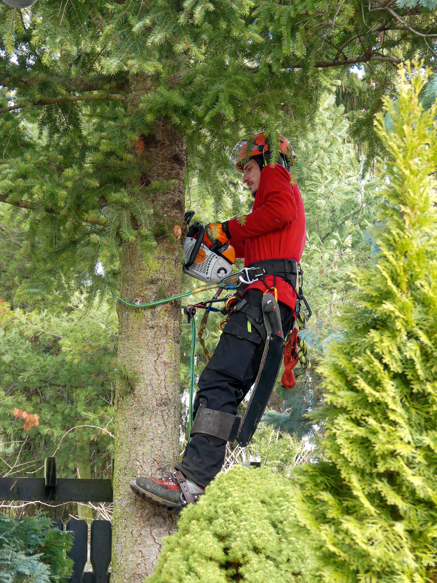 Biber-Baumdienst – Baumkletterer mit SKT – A-  und B-Scheinen