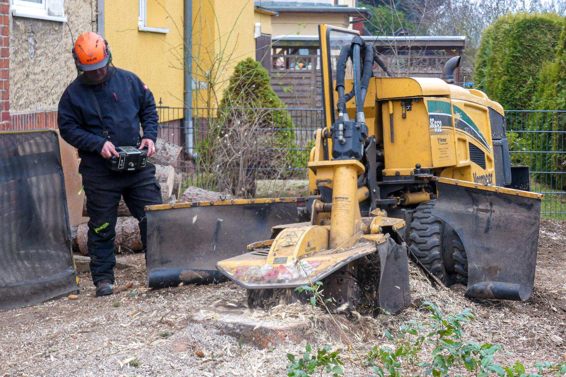 Biber-Baumdienst – Stubbenfräse im Einsatz